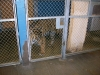 national-zoo-tiger-in-cage
